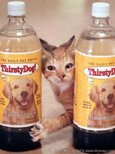 ¿agua embotellada para perros?